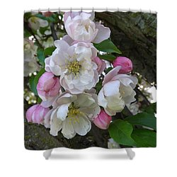 Apple Blossom Bouquet Shower Curtain