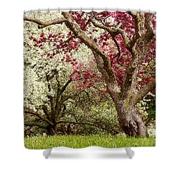 Apple Blossom Colors Shower Curtain by Joe Mamer
