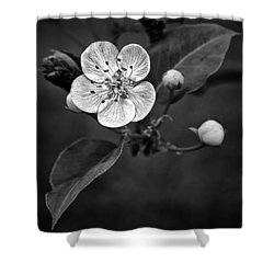 Apple Blossom On The Farm Shower Curtain