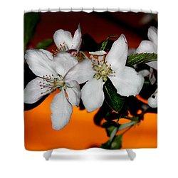 Apple Blossom Sunrise I Shower Curtain
