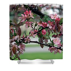 Shower Curtain featuring the photograph Apple Blossom Time by Kay Novy
