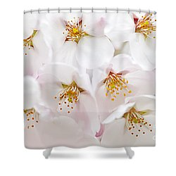 Apple Blossoms Shower Curtain by Elena Elisseeva