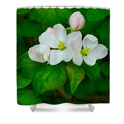 Apple Blossoms Shower Curtain
