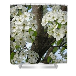 Apple Blossoms Shower Curtain by Randi Shenkman