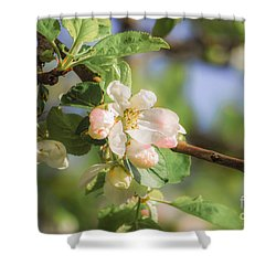Apple Tree Blossom - Vintage Shower Curtain by Hannes Cmarits