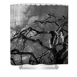 Apple Tree Bw Shower Curtain