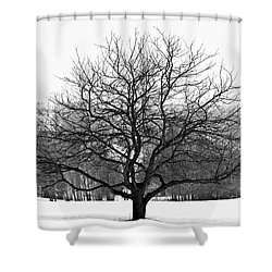 Apple Tree In Winter Shower Curtain by Elena Elisseeva