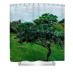 Apple Trees By The Sea Trouville Shower Curtain by Gustave Caillebotte