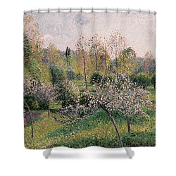 Apple Trees In Blossom Shower Curtain by Camille Pissarro