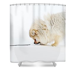 Apport Shower Curtain by Jenny Rainbow
