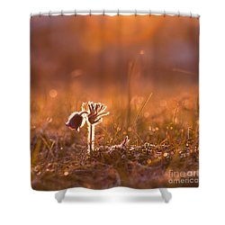 Shower Curtain featuring the photograph April Morning by Kennerth and Birgitta Kullman