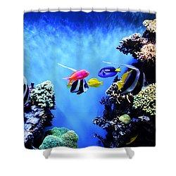 Aquarium 1 Shower Curtain by Barbara Snyder