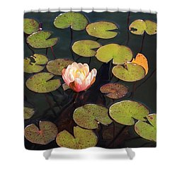 Aquatic Garden With Water Lily Shower Curtain