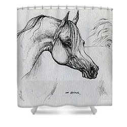 Arabian Horse Drawing 28 Shower Curtain by Angel  Tarantella