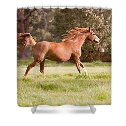 Arabian Horse Running Free Shower Curtain by Michelle Wrighton