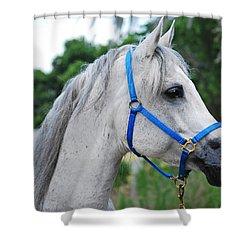 Arabian Shower Curtain