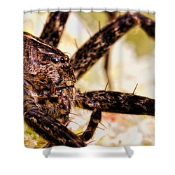 Arachnophobia Shower Curtain by Bob Orsillo