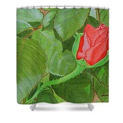 Arboretum Rose Shower Curtain