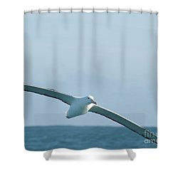 Arbornos In Flight Shower Curtain