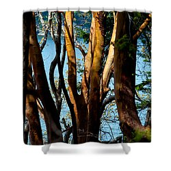 Arbutus Tree Shower Curtain by Sabine Edrissi