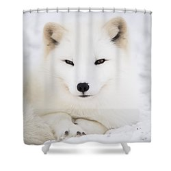 Arctic Fox Resting In The Snow Shower Curtain