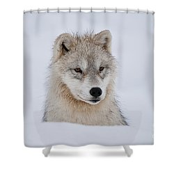 Arctic Pup In Snow Shower Curtain