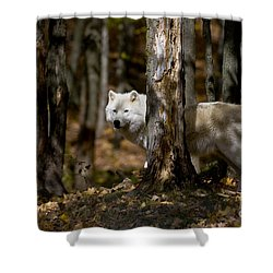 Shower Curtain featuring the photograph Arctic Wolf In Forest by Wolves Only