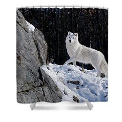 Shower Curtain featuring the photograph Arctic Wolf On Rock Cliff by Wolves Only