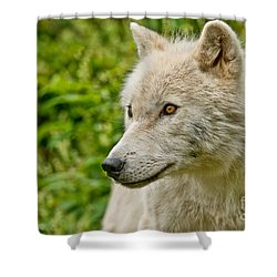 Arctic Wolf Pictures 241 Shower Curtain
