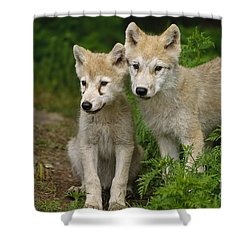 Arctic Wolf Puppies Shower Curtain