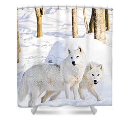 Arctic Wolves Shower Curtain by Cheryl Baxter