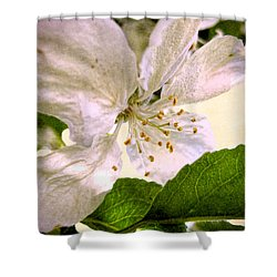Ardent Spring Shower Curtain by Kathy Bassett
