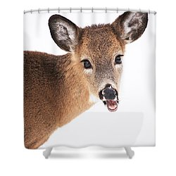 Are You Done Taking Pictures Shower Curtain by Karol Livote