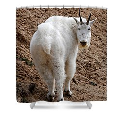 Are You Following Me Shower Curtain by Vivian Christopher