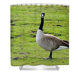 Are You Talking To Me Shower Curtain by Barbara Snyder