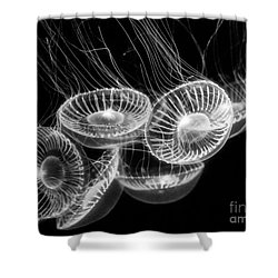 Area 51 - Moon Jellies Aurelia Labiata Shower Curtain by Jamie Pham