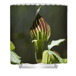 Arisaema Triphyllum Jack-in-the-pulpit Shower Curtain by Rebecca Sherman