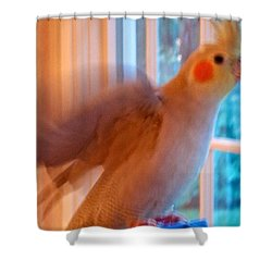 Aristotle Says Shoot Quick Shower Curtain