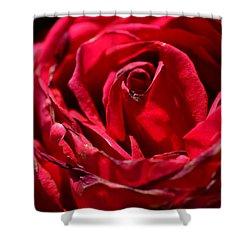 Arizona Rose I Shower Curtain