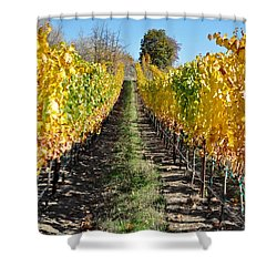 Around And About In My Neck Of The Woods Series 25 Shower Curtain