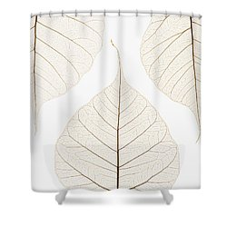 Arranged Leaves Shower Curtain by Kelly Redinger