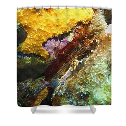 Arrow Crab In A Rainbow Of Coral Shower Curtain by Amy McDaniel