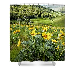 Shower Curtain featuring the photograph Arrow Leaf Balsam Root by Jack Bell