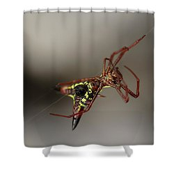 Arrow-shaped Micrathena Spider Starting A Web Shower Curtain