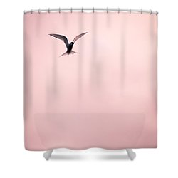 Shower Curtain featuring the photograph Artic Tern High In The Sky by Peta Thames