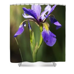 Artsy Iris Shower Curtain