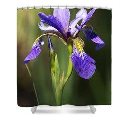 Artsy Iris Shower Curtain by Shelly Gunderson