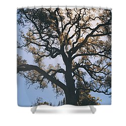 As We Grow And Change Shower Curtain by Laurie Search