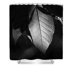 Ash Leaf Shower Curtain