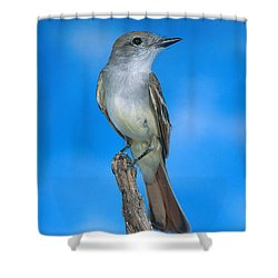 Ash-throated Flycatcher Shower Curtain by Anthony Mercieca